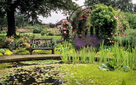 Garden With Lily Pond