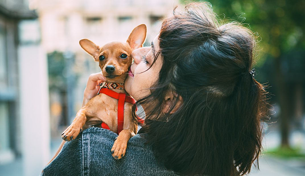 woman kissing her Chihuahua