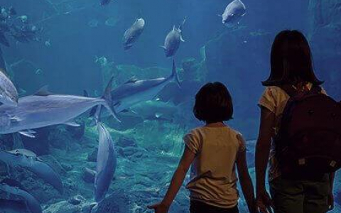 children looking at an aquarium tank