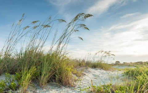 photo of tall grass in the sand