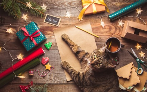cat with christmas gifts