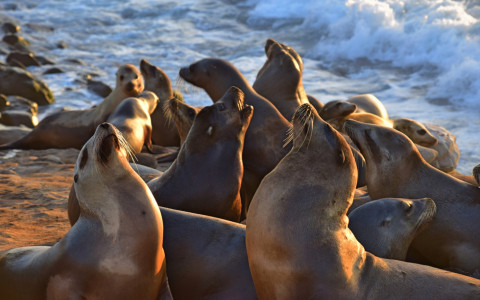 sea lions posing for camera
