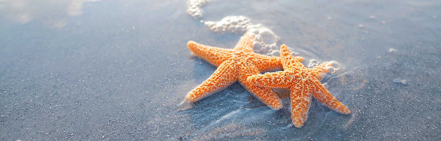 Two starfish washed up on ocean shore