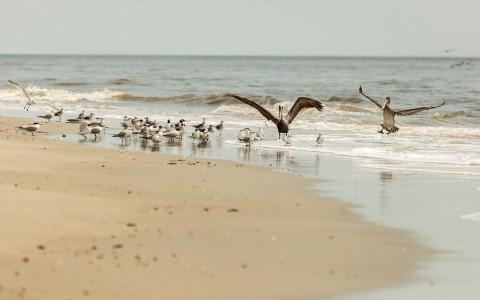 Group of seagulls standing on seashore
