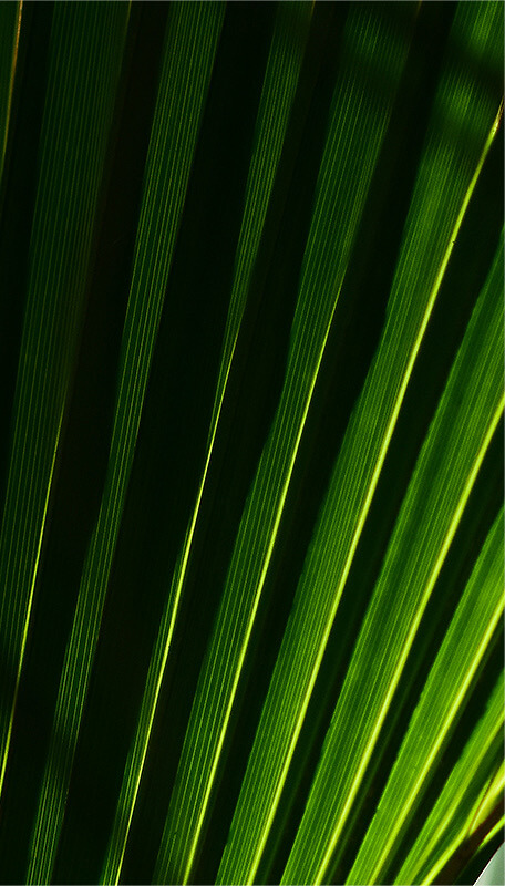 closeup of palm frond