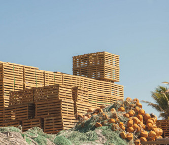 Wooden crates stacked outside next to palm trees
