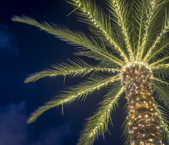 palm tree with christmas lights