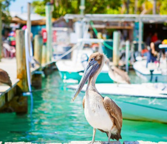 pelican sitting on wharf overlooking blue water