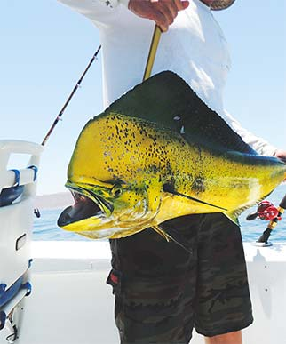 Man holding big yellow & green fish on boat