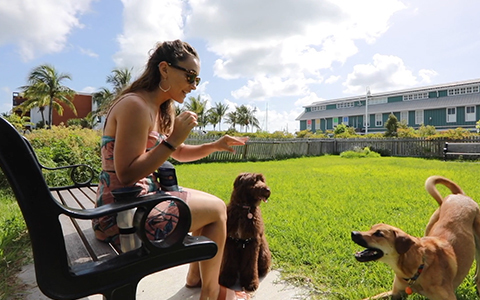 Key west garden and dog park video thumbnail
