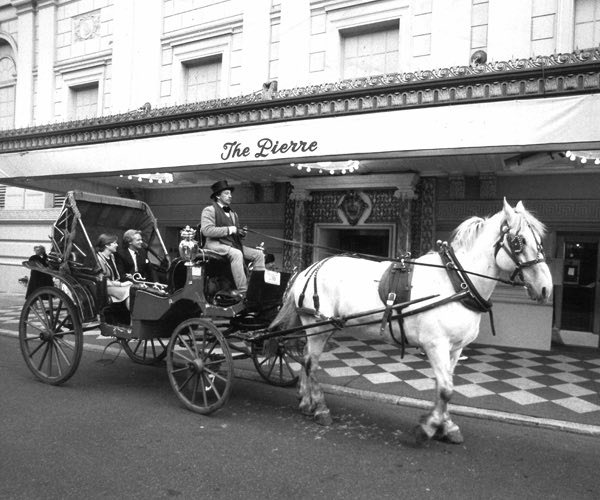 White horse pulling carriage in front of hotel
