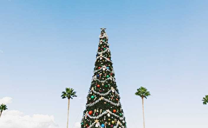 Tall narrow Christmas tree colorfully adorned and set against azure sky with palm trees in background