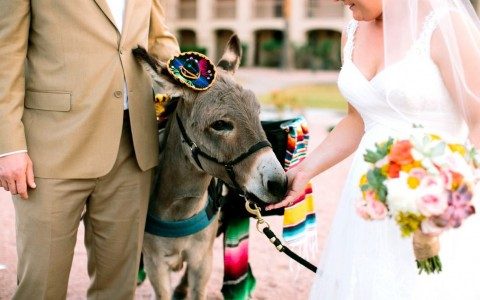 bride and groom with donkey