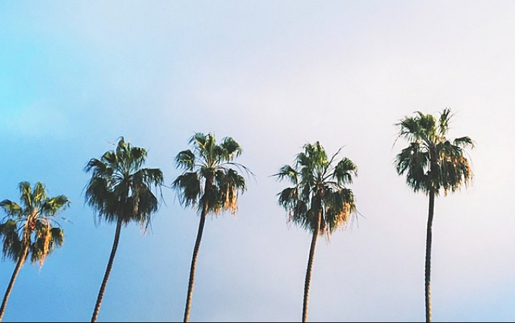 tall palm trees sky view