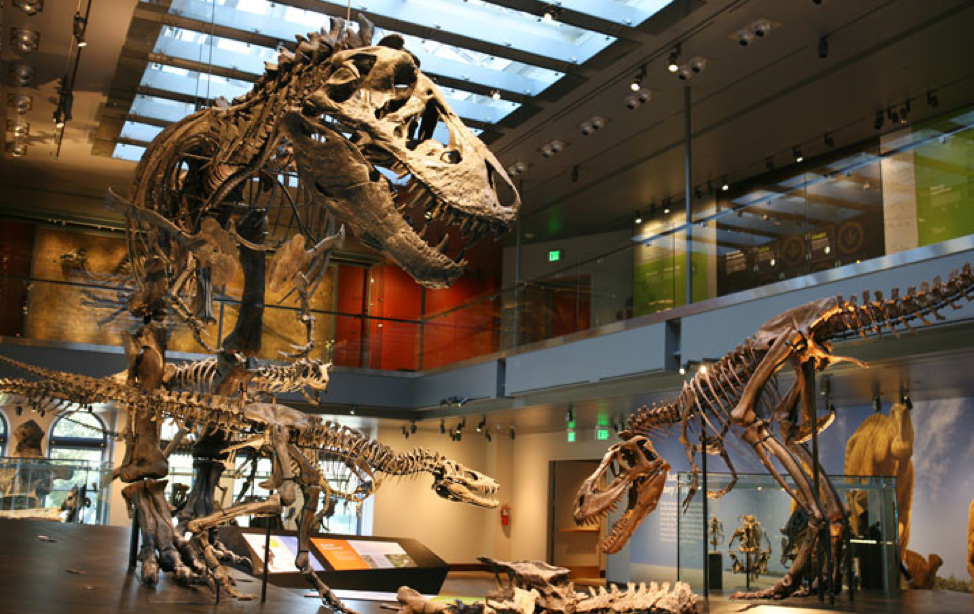 huge dinosaur fossils in museum