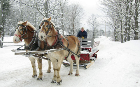 man in horse sleigh in winter snow