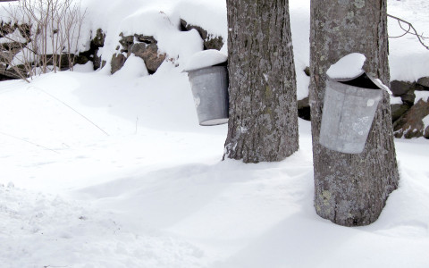 Tree trunks with trash cans attached in snow