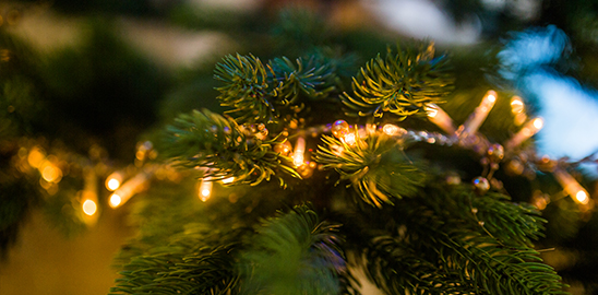 closeup of lights on tree