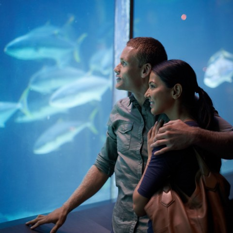 man and woman at an aquarium
