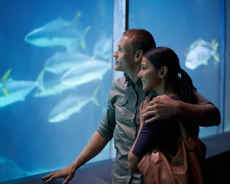 couple at a aquarium