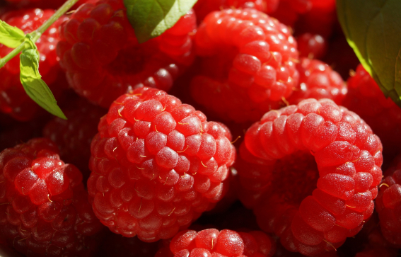 Raspberries and Green Vine