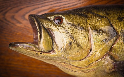 taxidermy fish on a plank