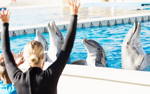dolphins being trained by a trainer and kids waving