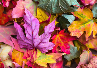 picture of multicolored leaves
