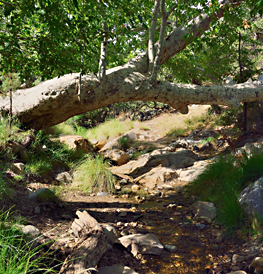 woods with large tree branch and rocks