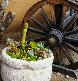 rustic wheel with white pot and cactus