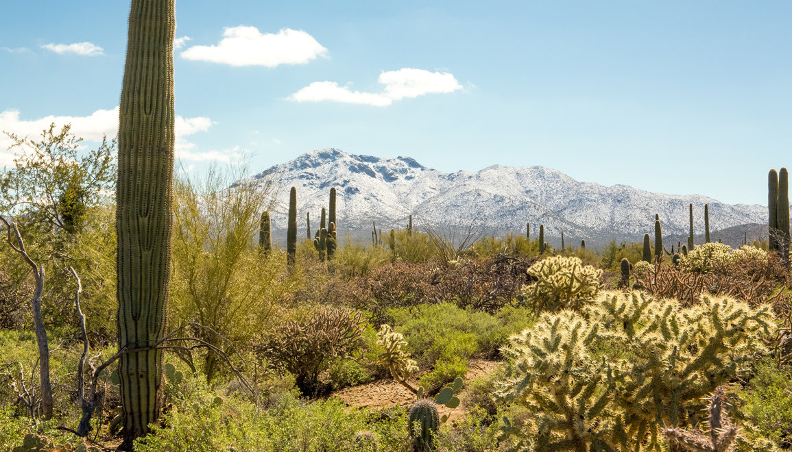 greenery in the desert with mountains in the distance