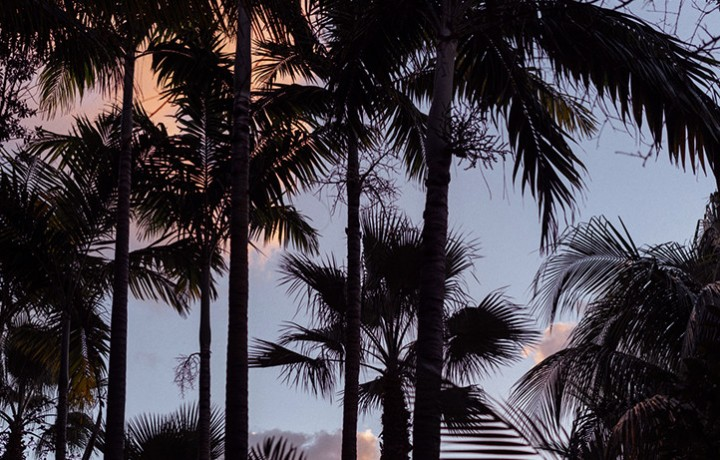 Palm tree silhouettes against sunset sky
