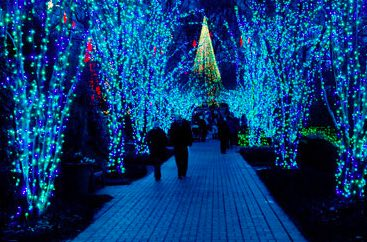 A couple on a walkway surrounded by trees decorated with Christmas lights