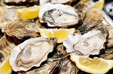 Close up of oysters with lemon slices