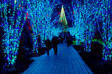 A couple on a walkway surrounded by Christmas tree lights at Garden Lights Holiday Nights