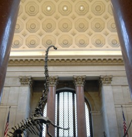 museum of natural history entrance