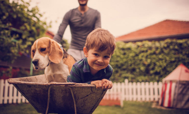 boy and beagle in wheelbarrow