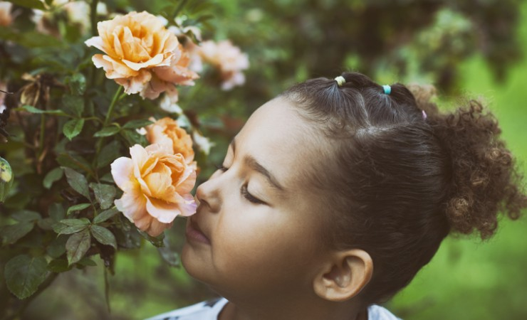 child smelling roses in garden