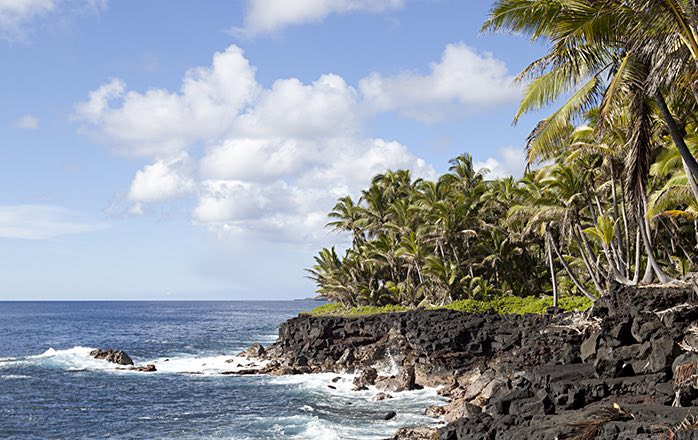 rocky beach with palm trees lining the edge