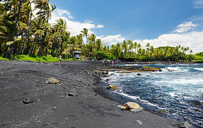 black sand beach lined with palm trees