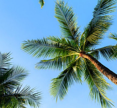 Shot of palm tree and sky