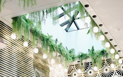 ceiling with skylight and green plants