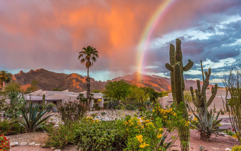 Cactus on sunset with rainbow
