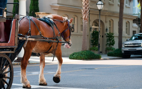 a horse pulling a carriage walking down the street