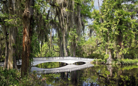 white bridge over a body of water at a plantation surrounded by draping trees