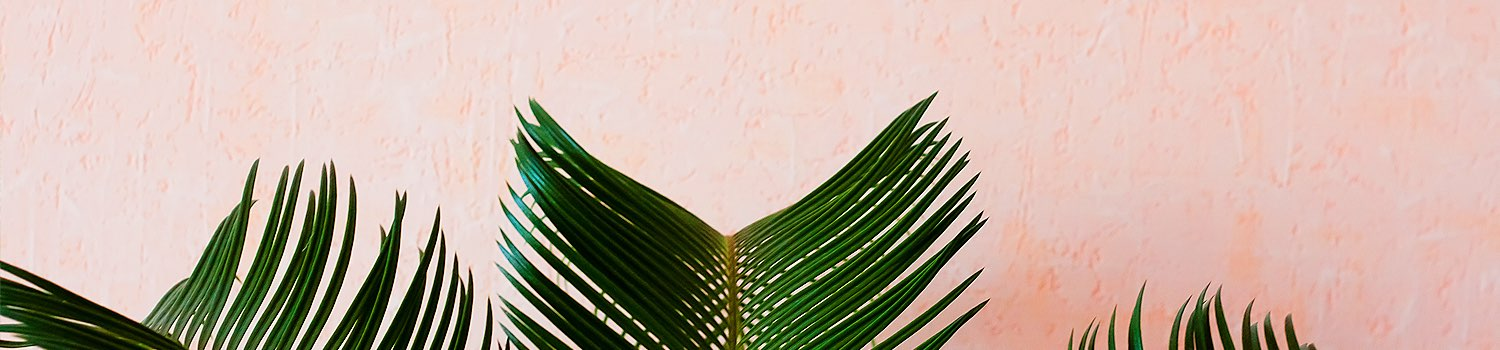 palm leaves in front of a pink wall