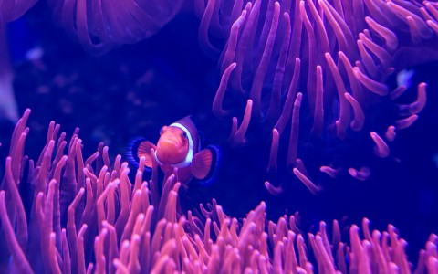 clown fish in dark tank