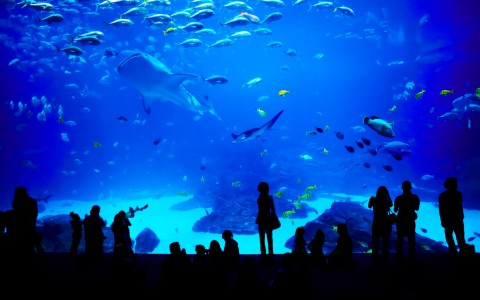 group of people standing in front of a large fish tank at the aquarium