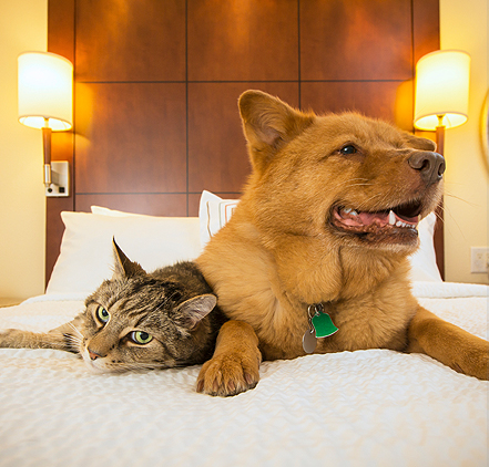 a dog and cat laying on the bed together