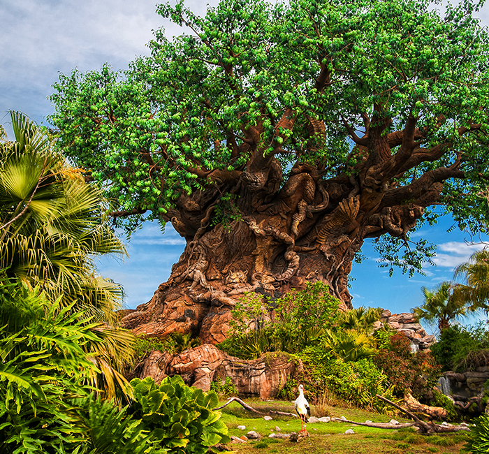 The tree of life at Disney's Animal Kingdom Theme Park